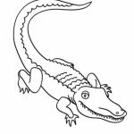 Easy Preschool Printable of Alligator Coloring Pages   qov5f