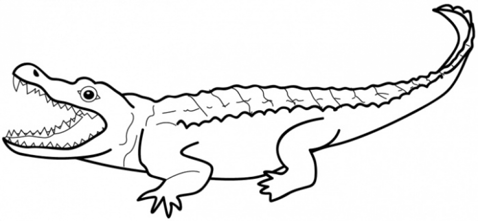 Free Alligator Coloring Pages for Toddlers   p97hr