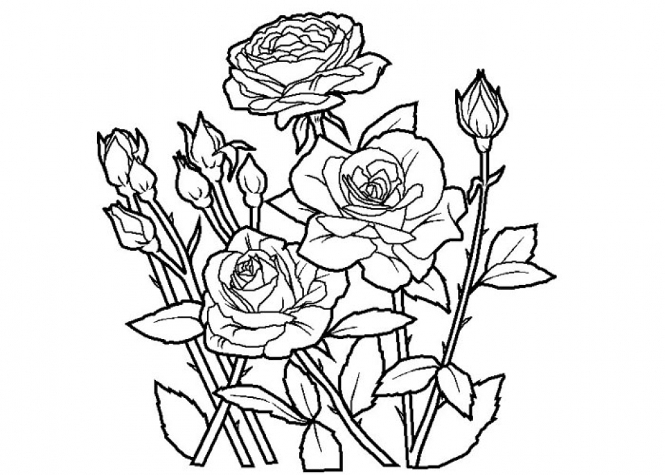 Get this free roses coloring pages for adults to print 16629 for Rose color pages