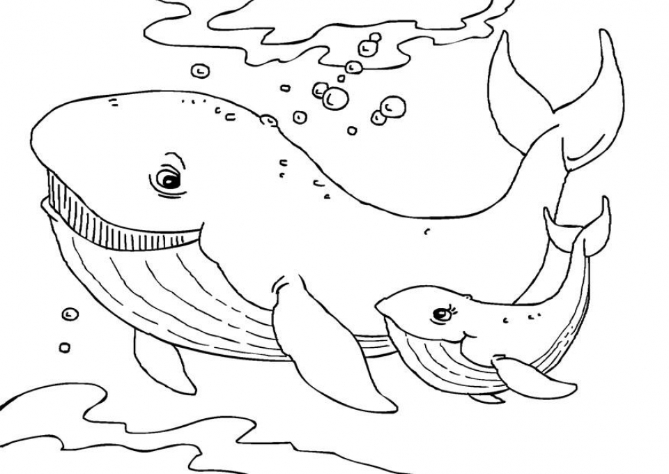 Free Whale Coloring Pages   25762