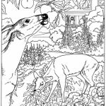 Nature Coloring Pages for Toddlers   dl53x