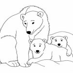 Polar Bear Coloring Pages Free to Print   j6hdb