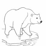 Polar Bear Coloring Pages to Print Online   lj8rr