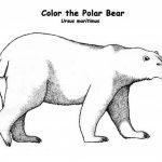 Preschool Polar Bear Coloring Pages to Print   nob6i