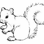 Preschool Printables of Squirrel Coloring Pages Free   b3hca