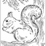 Squirrel Coloring Pages Free to Print   j6hdb