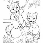 Free Raccoon Coloring Pages to Print   00029