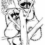 Free Raccoon Coloring Pages to Print   77745