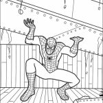 Free Spiderman Coloring Pages   623674