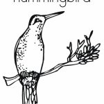 Hummingbird Coloring Pages Free Printable   01108