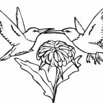Online Hummingbird Coloring Pages   43569
