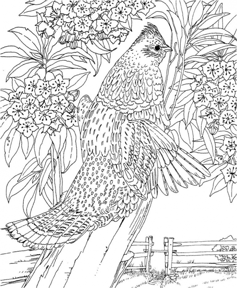 Get this printable difficult animals coloring pages for for Difficult halloween coloring pages