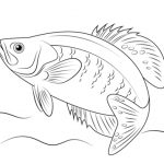 Printable Fish Coloring Pages Online   781025