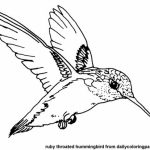 Printable Hummingbird Coloring Pages   00467