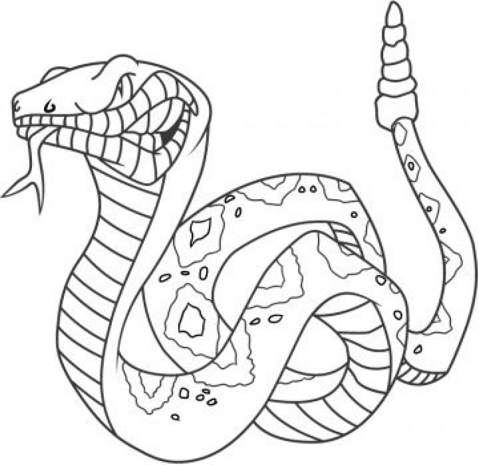 Printable Snake Coloring Pages Online   46714