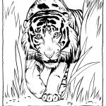 Tiger Coloring Pages to Print for Free - 37011