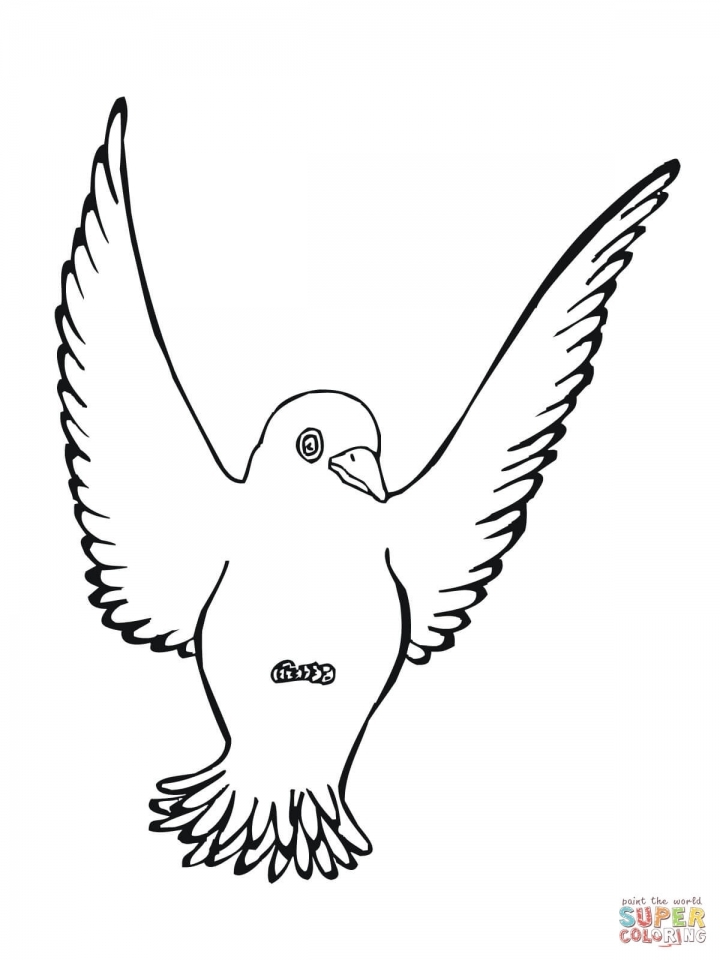 Bird Coloring Pages Free to Print   80672
