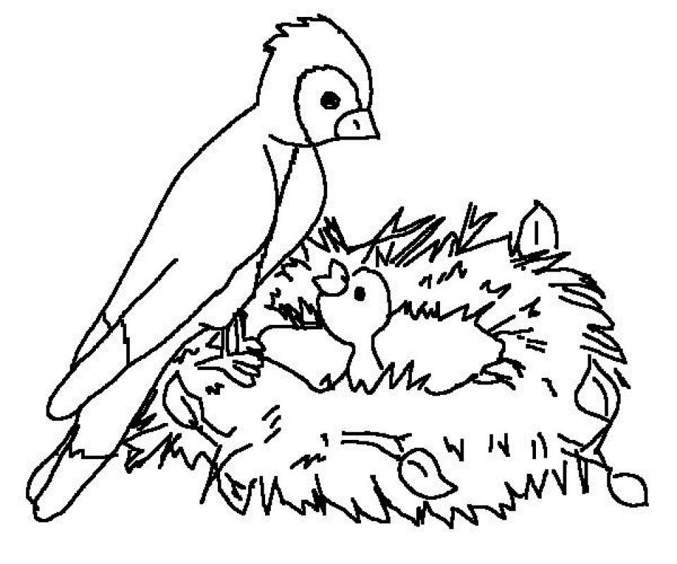 online bird coloring pages - photo#15