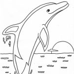 Dolphin Coloring Pages to Print Out   81630