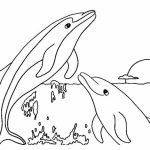 Free Printable Dolphin Coloring Pages for Kids   71523
