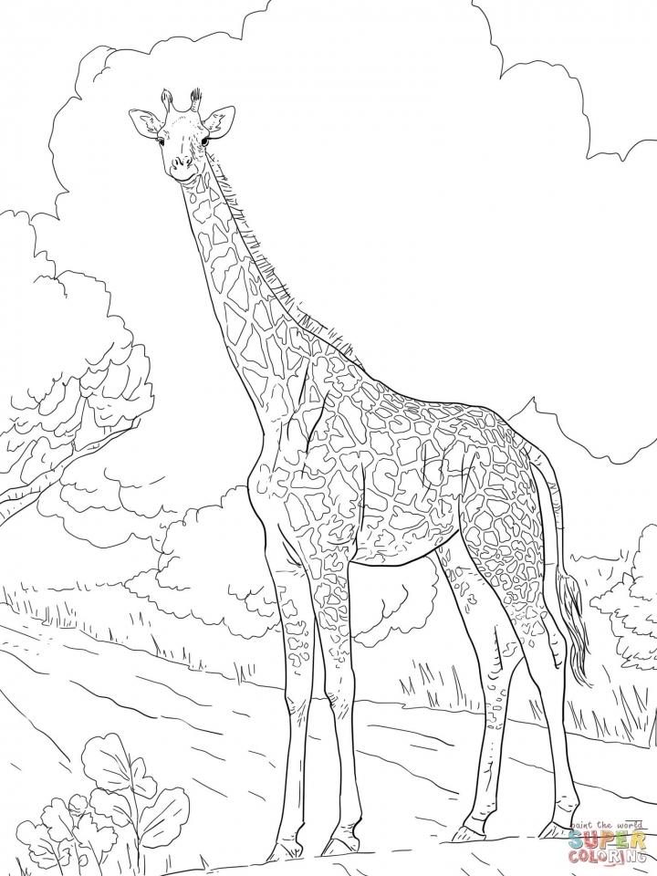 Giraffe Coloring Pages Hard Printables for Older Kids   41920