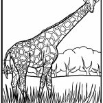 Giraffe Coloring Pages Realistic Animals   62419