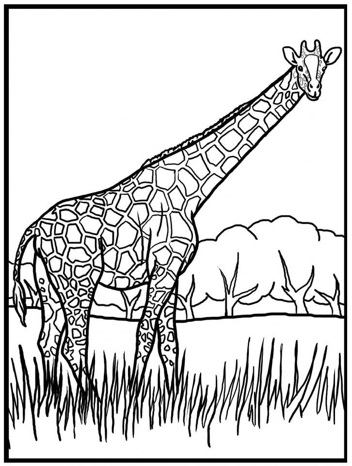 Get this giraffe coloring pages realistic animals 62419 for Coloring pages animals realistic