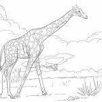 Giraffe Coloring Pages Realistic Animals   99562
