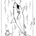 Great White Shark Coloring Pages   26509