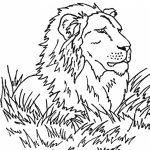 Lion Coloring Pages Free to Print   64871