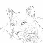 Mountain Lion Coloring Pages Printable   75636