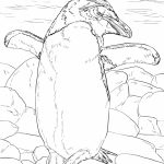 Penguin Coloring Pages for Adults Free to Print   90591