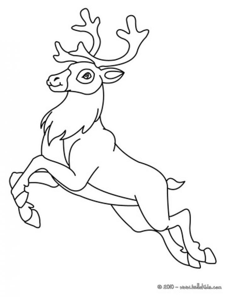 Reindeer Coloring Pages Printable   51428