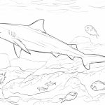 Shark Coloring Pages for Adults   86941