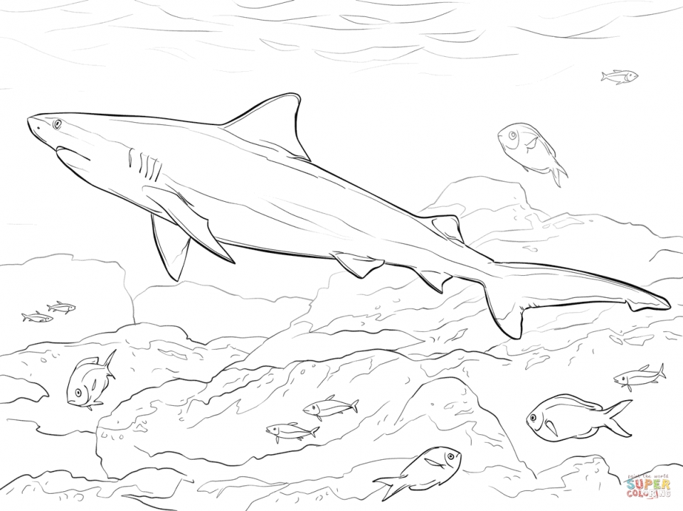 20 free printable shark coloring pages for Coloring pages shark