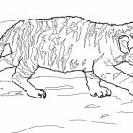 Tiger Coloring Pages for Older Kids   06102
