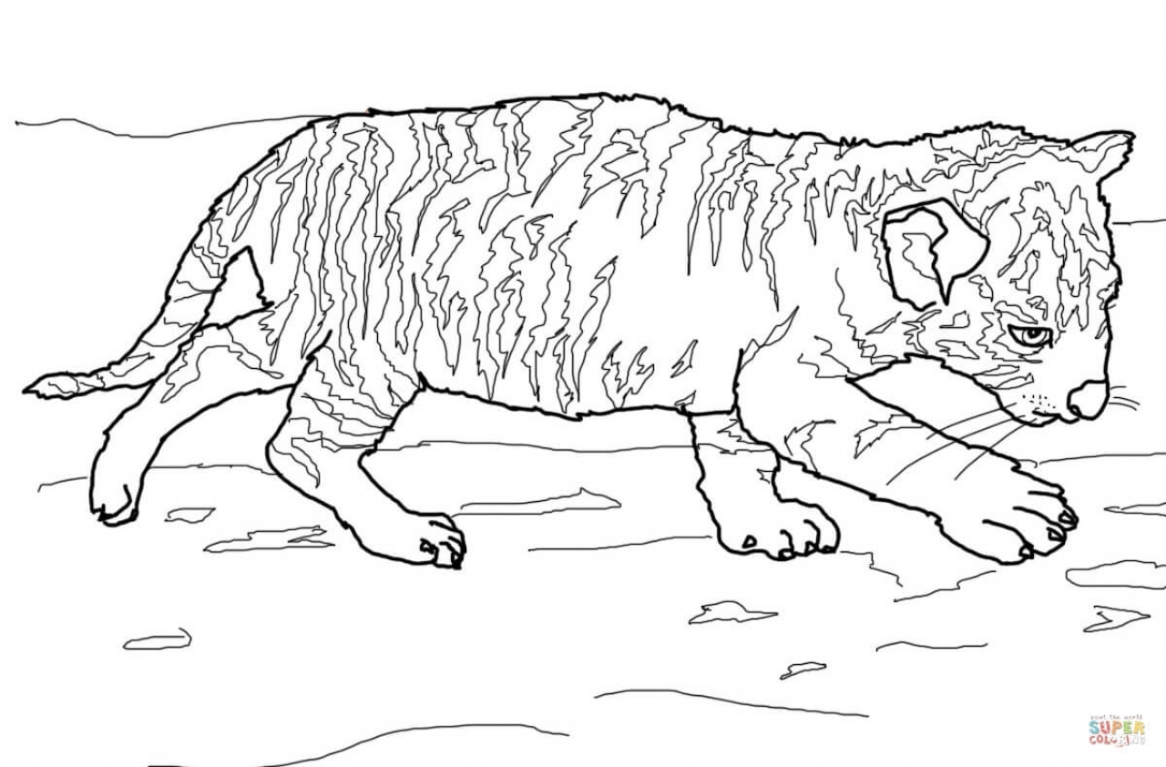 Get This Tiger Coloring Pages For Older Kids 06102