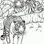 Tiger Coloring Pages for Older Kids   51824