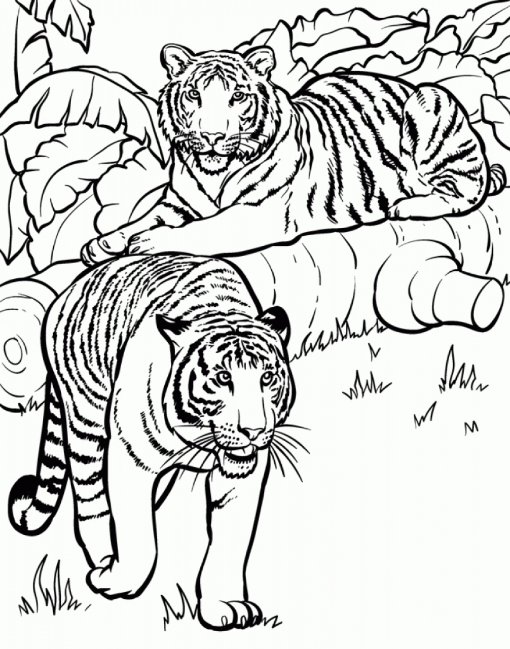 Get this tiger coloring pages for older kids 51824 for Coloring pages of tiger