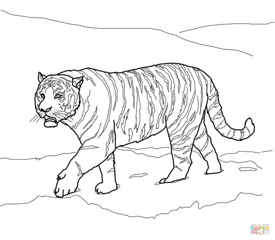 realistic cheetah coloring pages - get this tiger coloring pages realistic animal printables