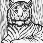 Tiger Coloring Pages to Print Out   31804