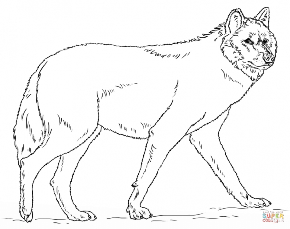 Wolf Coloring Pages Free to Print   56558