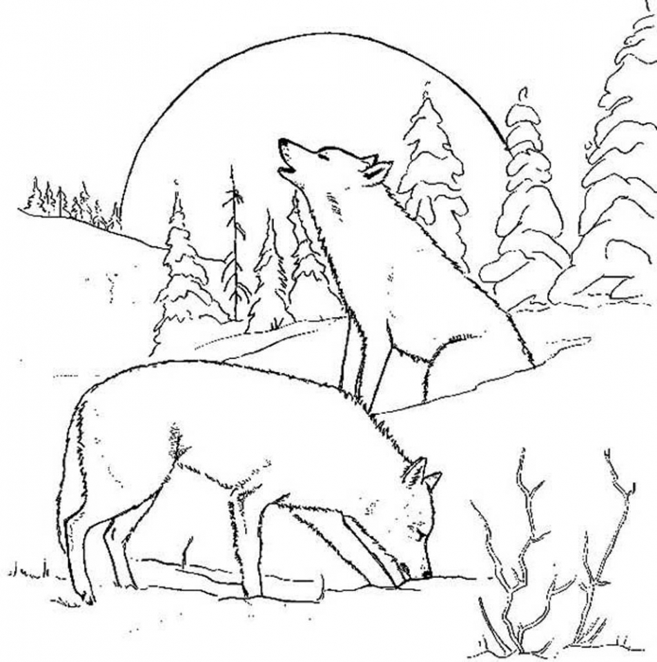 Wolf Coloring Pages to Print for Free   67301