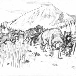 Wolf Pack Coloring Pages to Print   77521