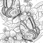 Advanced coloring pages of Butterfly for Adults - 56172