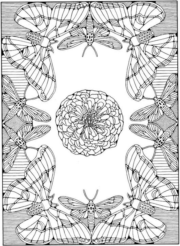 Advanced coloring pages of Butterfly for Adults - 89678