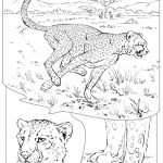 Free Printable Cheetah Coloring Pages - l67vb
