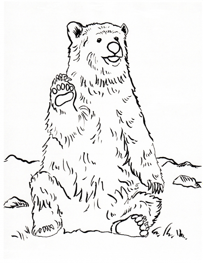 Bear Coloring Pages to Print   16259