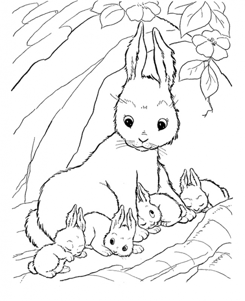 Bunny Coloring Pages Free   31772