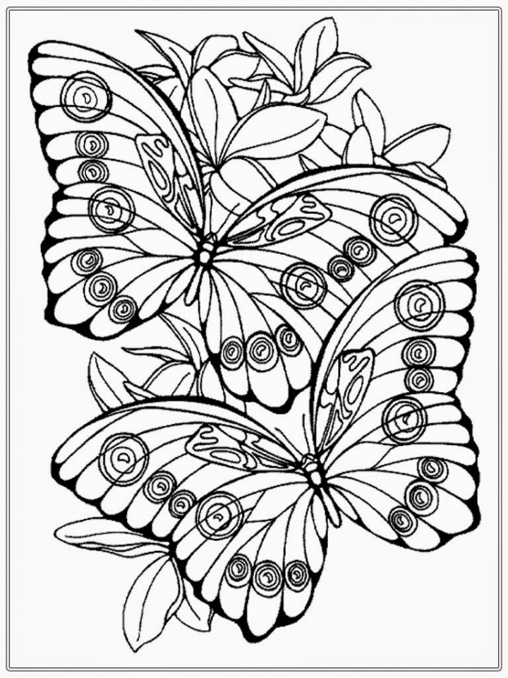 Butterfly Coloring Pages Adults Printable   8fge1